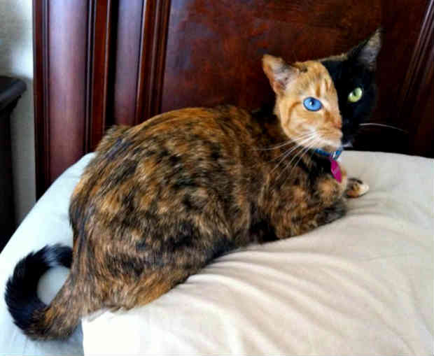 cat with unusual color 8 photo 8
